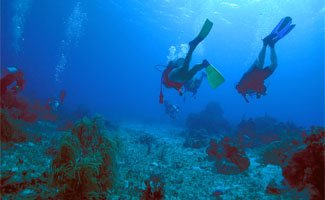 Scuba Diving Holidays QLD