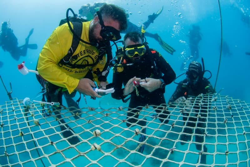 passions of paradise coral planting