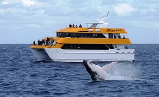 Whale Watching, Hervey Bay